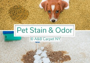 Pet Stain and Odor Removal - Mill Island 11234