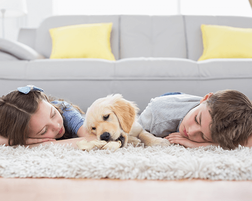 Environment friendly carpet cleaning in brooklyn